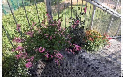 Haver og blomster på afsnittene
