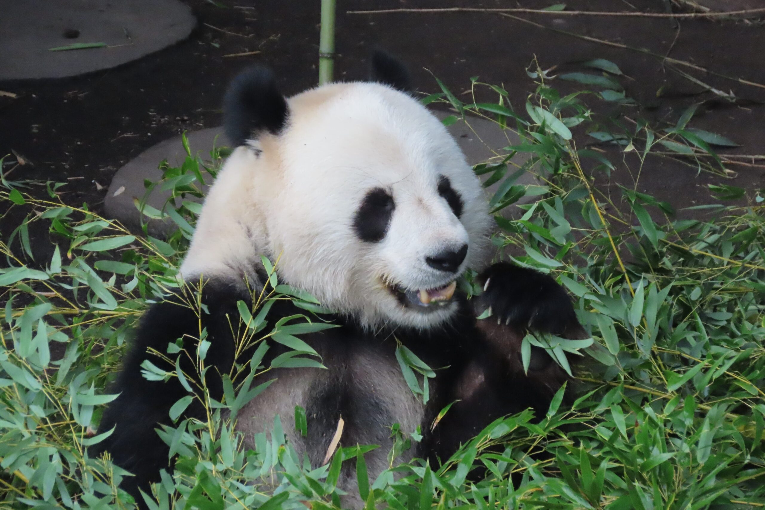 Håb i psykiatrien Nimbus zoo