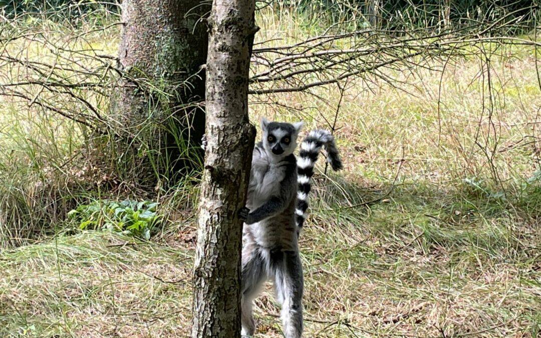Dejlig tur til Givskud Zoo
